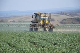 Неправильний захист озимого ріпаку в деяких господарствах призвів до втрати понад 50% урожаю