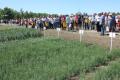 При організації демоділянок аграріям варто дослухатись порад фахівця