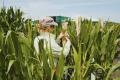 Натуральними засобами обробки насіння від Corteva оброблено 10 млн га в Європі