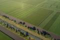 Демоділянки рекомендовано закладати на поширених у господарстві ґрунтах