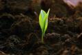 Знизити інтенсивність випаровування ґрунтової вологи можна кількома способами, – фермер