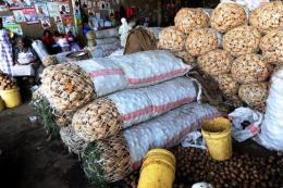 Кенійські вчені вивели нематодостійкі та ранньостиглі сорти картоплі