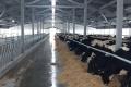 «Молоко Вітчизни» реконструювало корівник