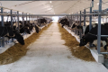 «Укрпромінвест-Агро» запустив друге приміщення для утримання корів за канадською технологією