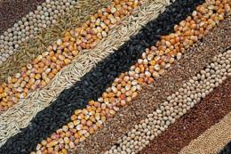 Майже 81 млн тонн основних культур зібрали українські сільгоспвиробники
