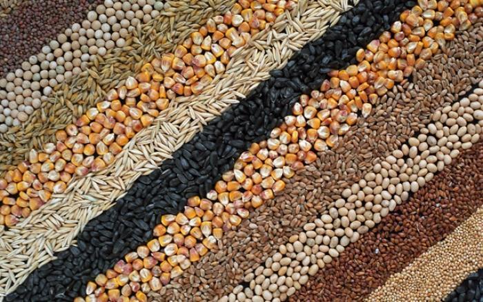 Україна експортувала більше 2,4 млн зернових