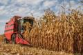 На Прикарпатті урожайність кукурудзи подекуди сягає 11 т/га