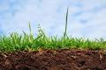 Понад 90% українських ґрунтів мають дуже низький вміст цинку, – дослідження
