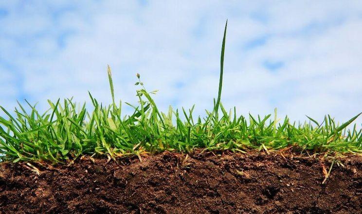Деградація та ерозія ґрунту в Україні частково є наслідком оранки надто великих площ