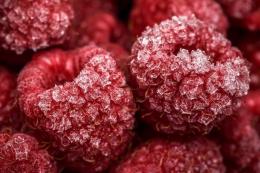 Виробник ягід у Львівській області збудував цех заморожування