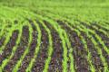 На Луганщині надали перевагу озимій пшениці та соняшнику