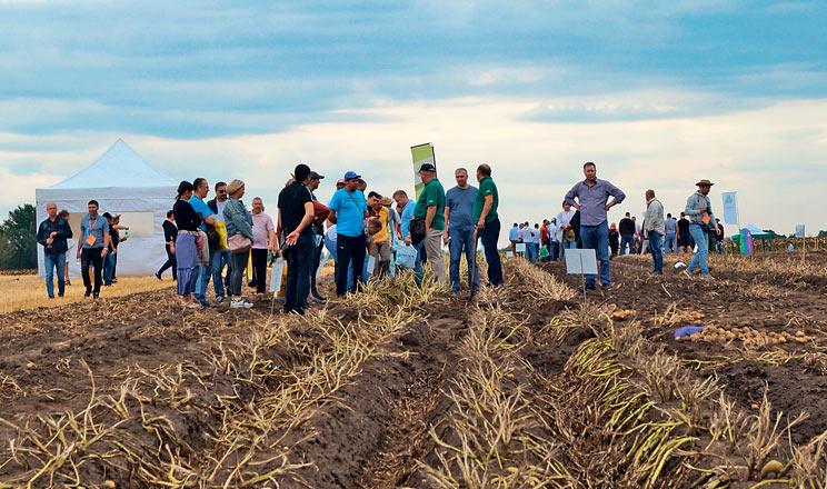 Всеукраїнський день картоплі 2020