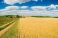Найоптимальніший земельний банк для агрохолдингу — до 30 тисяч гектарів, — думка