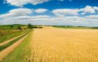 Аграрії поліпшили оцінки виробництва у II кварталі, – Держстат