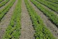 Підприємство «Агроекологія» формує перелік показників ефективності