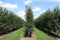 У «Агро-Еталоні» розроблятимуть систему захисту яблунь окремо для кожного сорту