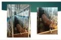 Як полегшити виявлення свинок в охоті