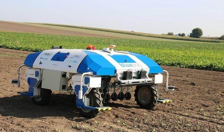 Strube розробляє робота-просапувача для цукрових буряків