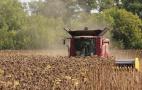 Середня урожайність соняшнику на кінець жнив на 18% поступається минулорічній