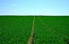 Біоприлиплювачі для сільського господарства