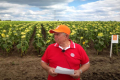 Через 5 років в Україні не вироблятимуть насіння лінолевих гібридів, — думка