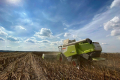 Пшениця займає найбільшу частку в структурі озимих «Контінентала»