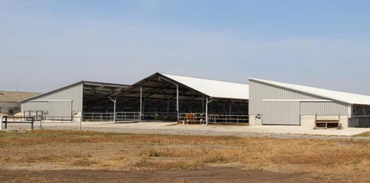 «Плосківське» планує побудувати комплекс на 900 корів