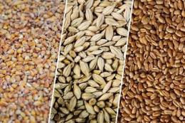 Запаси зерна на елеваторах знизилися до 4,2 мільйона тонн