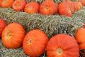 Фермери заклали гарбузи на зберігання