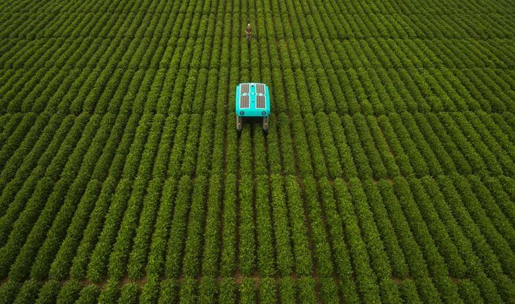 Робот від Google винюхує секрети рослин