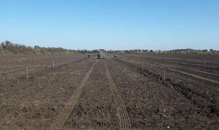 Агрохолдинг HarvEast посадив у Донецькій області 11,5 га горіхового саду