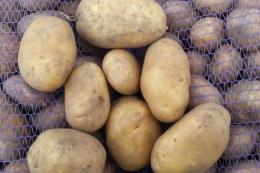 Картоплярство в Білорусі нерентабельне, – економіст