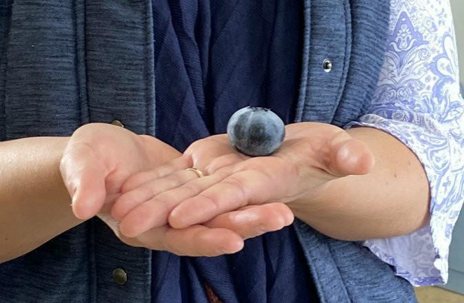 Найбільша ягода лохини встановила новий рекорд Гіннеса