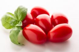 Представили продуктивний томат чері сливка Mistela F1