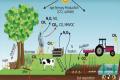 Сільське господарство є головним джерелом емісії одного з парникових газів, - дослідження