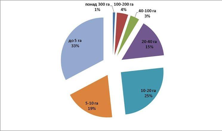 50% вітчизняних господарств вирощують лохину на площі до 10 га