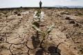 В умовах посухи пестициди ускладнюють поглинання рослиною вологи, – науковець