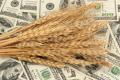 Світові ціни на зерно за рік зросли в середньому на 13,6%