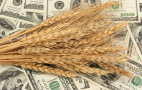 Експорт української пшениці досяг 13,617 млн тонн