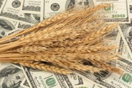 Обсяги експорту пшениці наближаються до 14 млн тонн