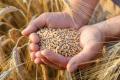 Українські фермери здатні підвищити врожаї завдяки використанню вологи