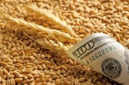 Ціни на чорноморську пшеницю досягли чотирирічного максимуму