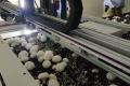 Українці проектують роботів-грибозбирачів для США