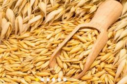 Елеватори й переробники накопичили рекордні запаси жита