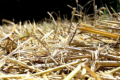 Agromino у 2021 році випробує нову технологію для збереження ґрунтової вологи
