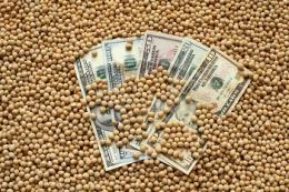 Зростання цін на сою спонукало господарство на Чернігівщині ввести її в сівозміну
