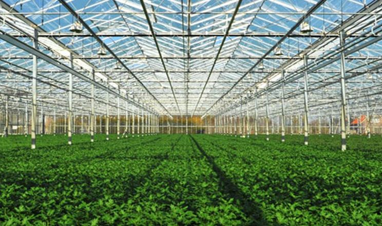 В Абу-Дабі побудують найбільшу в світі фруктово-овочеву ферму
