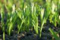 Дев'ять рекомендацій щодо накопичення та використання вологи у ґрунті