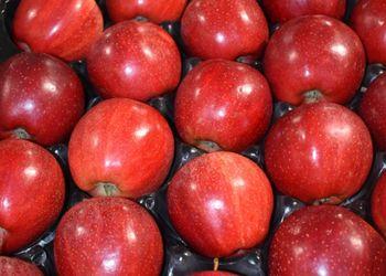 Польські садівники цікавляться одноколірними сортами яблук