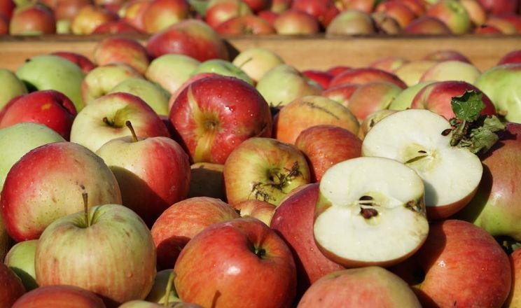 Ціни на промислові яблука у Польщі поволі ростуть
